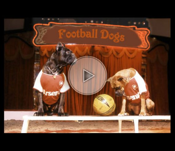 football dogs, dogs act, numéro de chiens, dogs, chiens (4)