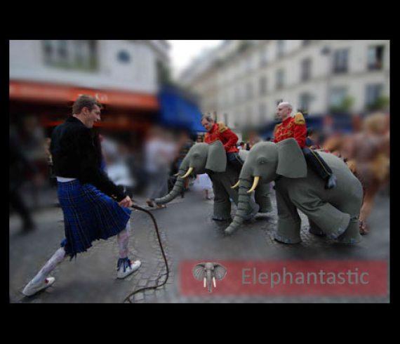 elephant, éléphant, animal, animaux