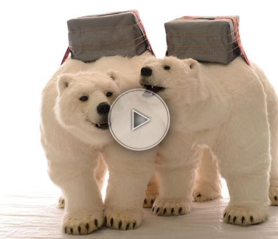 polar bear, ours polaire, north pole, pole nord, cold, froid, iceberg
