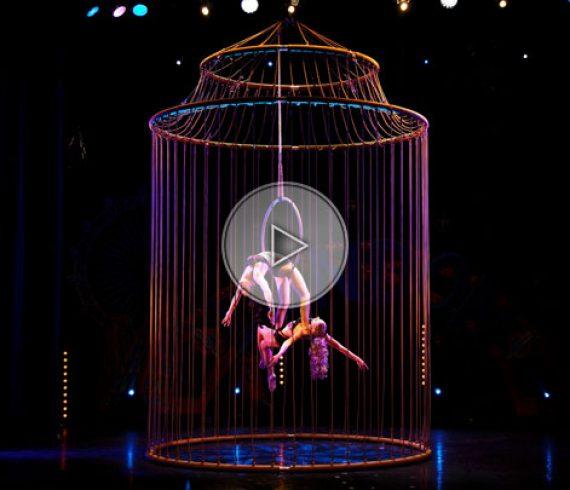 cage dorée, oiseaux acrobatiques, numéro aérien, spectacle aérien, spectacle cage, numéro cage
