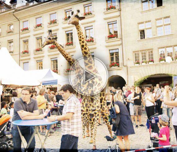 échassiers girafe, girafes, échasses, echasses girafe