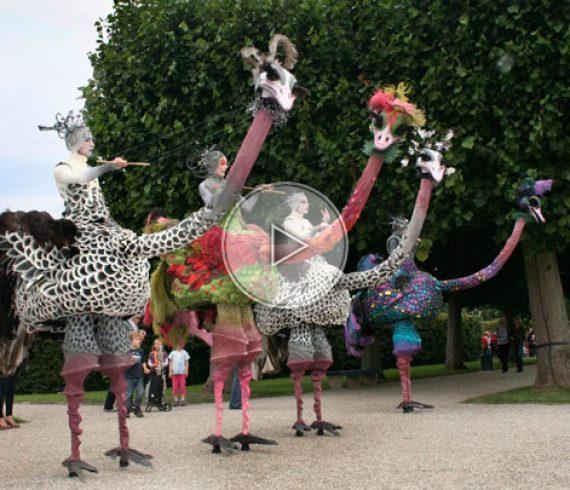 autruches, autruche échasses, échassiers autruches, animation déambulatoire