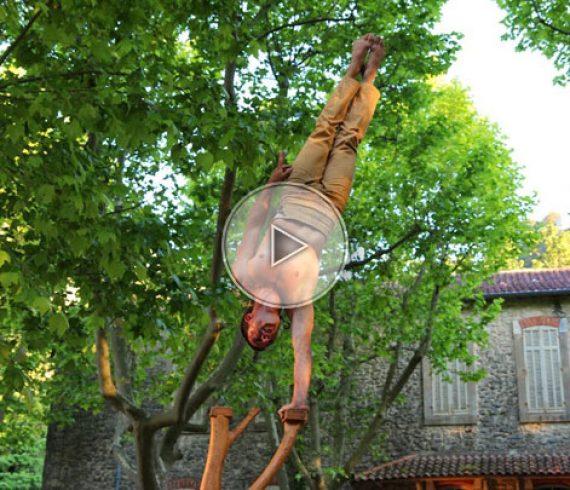 équilibre arbre, équilibriste arbre, numéro écologique, écologie, nature, arbre