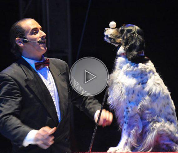 chien paresseux, numéro de chien, dresseur de chien, chien comique