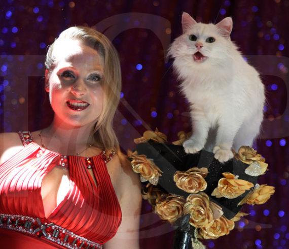 chats, suisse, fribourg, palace, dresseuse de chats, dresseur de chats,