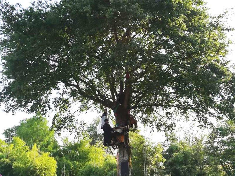 Show musique, musique aérienne, musique unique, musique sur un arbre, musique extérieure, concert sur un arbre, violon, violoncelle, piano aérien, piano perché, piano sur arbre, garden party
