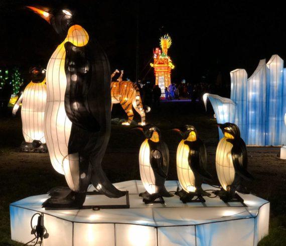 évènement français, évènement nature, chine évènement, thème asie, évènement nocturne, évènement lumineux, que faire à Marseille, évènement à Marseille, évènement animaux, animaux lumineux, lanternes