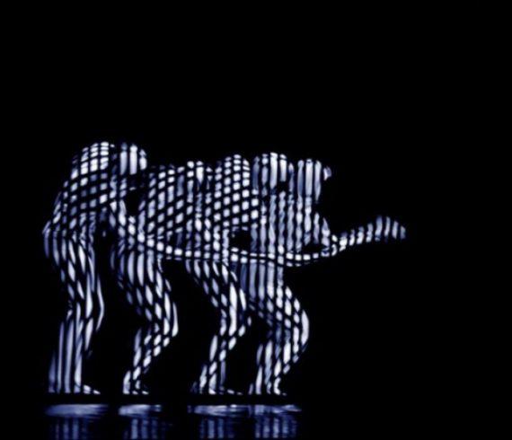 Spectacle de zèbre, acte de zèbre, danse zébrée, danse hypnotisante, danse inhabituelle, effet d'optique, spectacle d'effets optiques, danse à effet optique, danse hypnose, spectacle hypnose, danseurs zèbres, danseurs led, danseurs lumineux, spectacle dans le noir